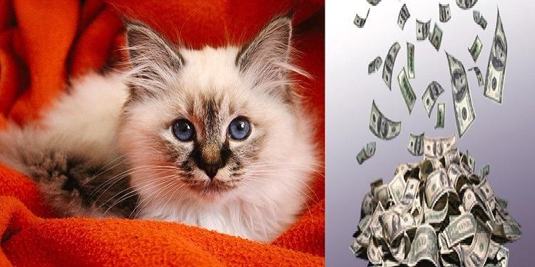 القط العبوس يجني ثروة (صور)