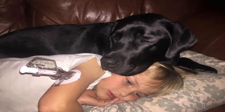 Santé:Les chiens détectent le niveau de glycémie chez les hommes