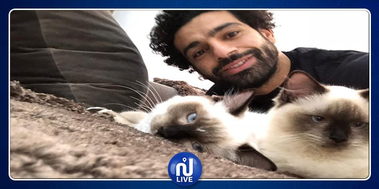 بعد الجدال حول تصديرها: محمد صلاح غاضب لأجل الكلاب والقطط