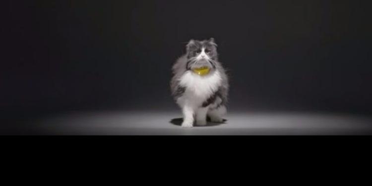 Catterbox : enfin les chats vont dire tout ce qu'ils pensent...