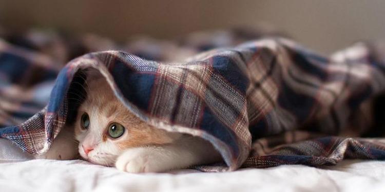 ولادة قطة بوجهين وأربعة عيون (صور)