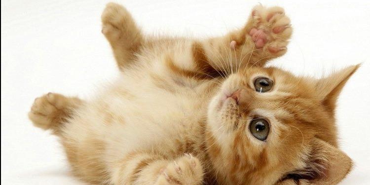 قطة بلونين تُشعل الانستغرام (صور)