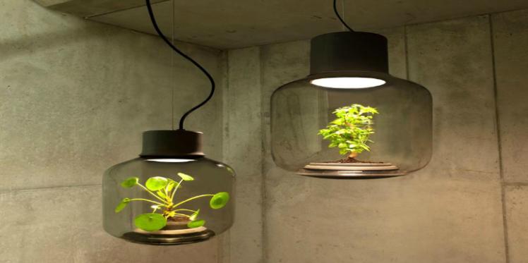 Mygdal Plantlam, la lampe- plante pour vos intérieurs sans fenêtre !