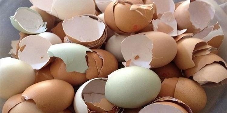 طرق جديدة للإستفادة من قشور البيض!