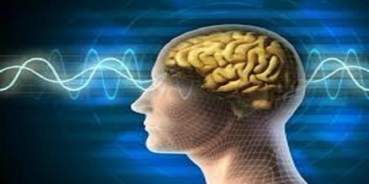 كيف تتحرك الأفكار عبر الدماغ؟ (فيدو)