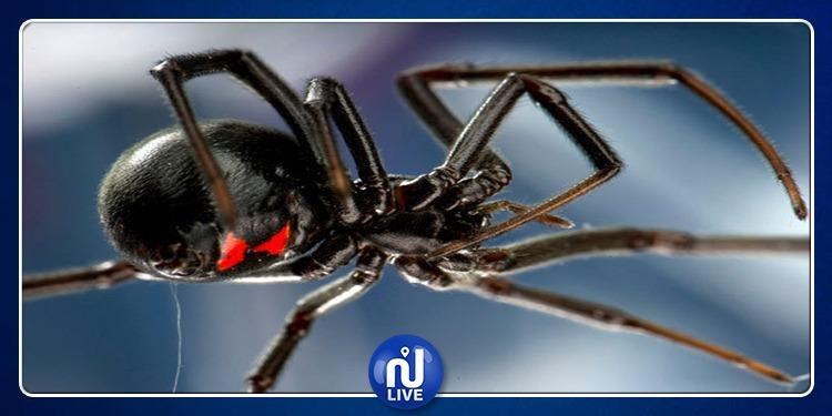 سم العناكب ينقذ مرضى السكتة الدماغية