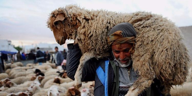 اتحاد الفلاحين: إقبال ضعيف جدا على اقتناء أضاحي العيد رغم انخفاض الأسعار