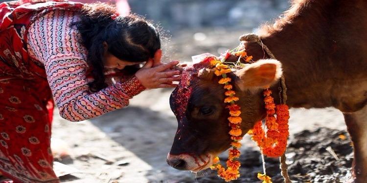 الهند.. قتل مسلمين اثنين بدعوى حماية الأبقار
