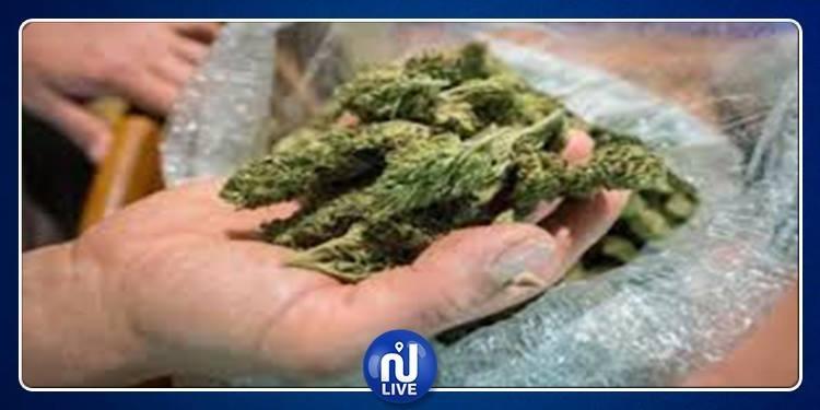 حجز بذور لنبتة الماريخوانا في بن عروس