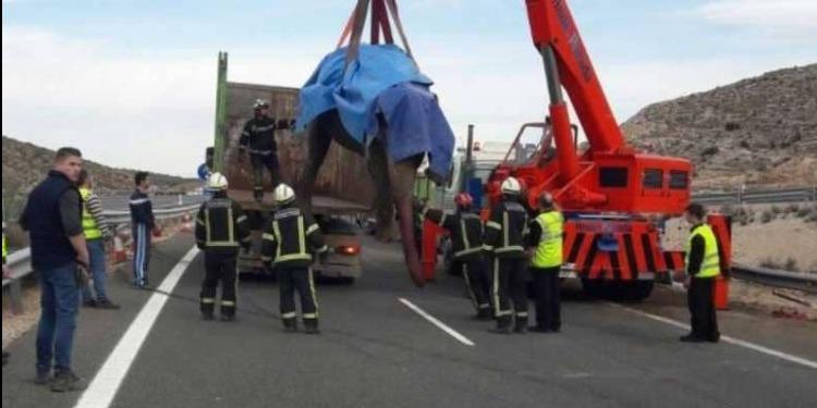 إسبانيا: حادث مأساوي لفيلة سيرك بالطريق السريعة (فيديو)