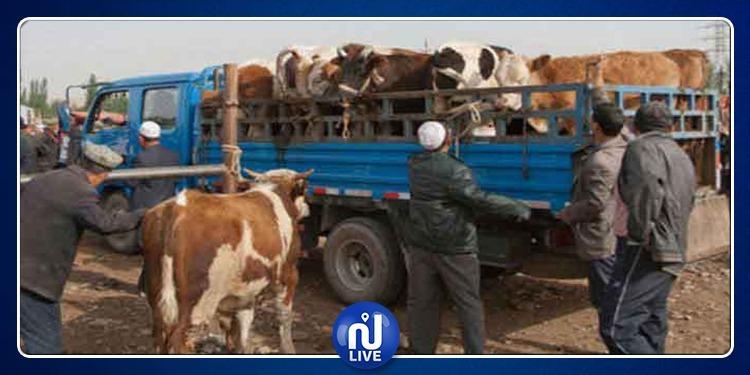 بنزرت: حجز 28 رأسا من الأبقار وتحرير 10محاضر بحث اقتصادية