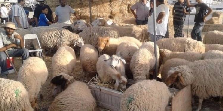 السعودية: 840 الف رأس غنم خلال موسم الحج الحالي