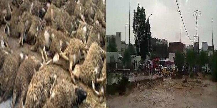 Hammamet : des moutons de sacrifice, emportés par les eaux de pluie…