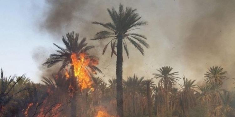 Kébili: L'incendie dans l'ancienne oasis maitrisé