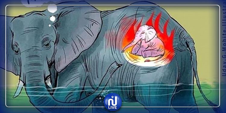 Inde : Une éléphante enceinte meurt après avoir mangé un fruit piégé