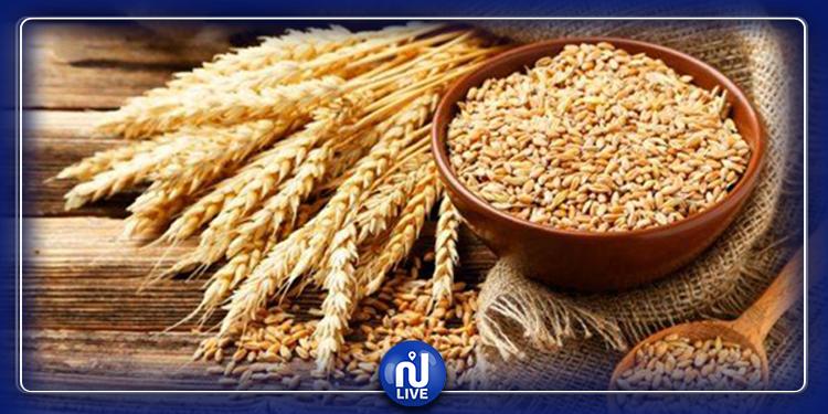 Blé tendre : les quantités qui seront récoltées devraient couvrir 4 à 5 mois de consommation