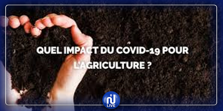 Agriculture : Impact du Covid-19