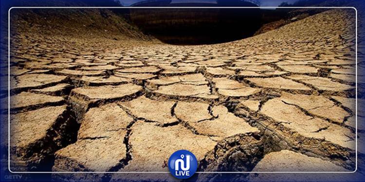 Tunisie : 150 mille hapourraient être endommagés par la sécheresse