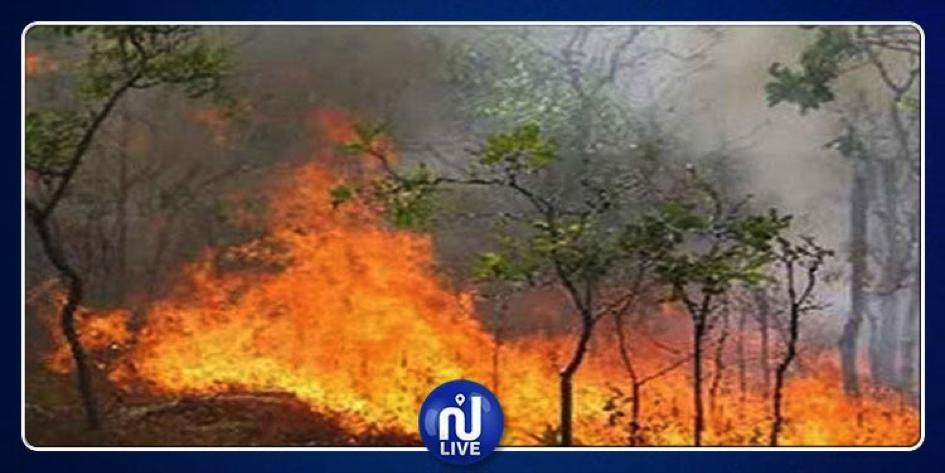 Sidi Bouzid : Plusieurs superficies forestières détruites suite à un incendie