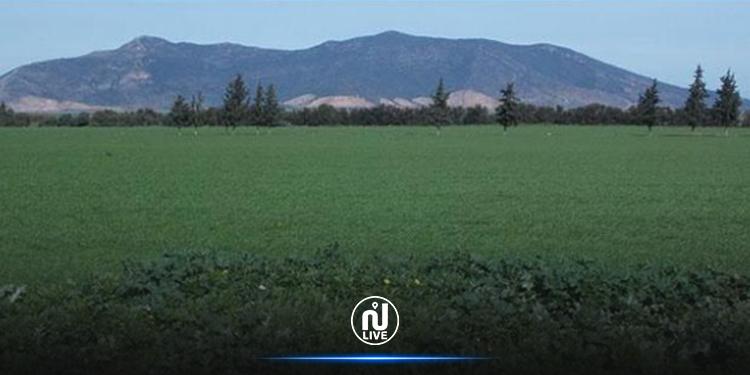 Bizerte: Approbation de 139 opérations d'investissement agricole