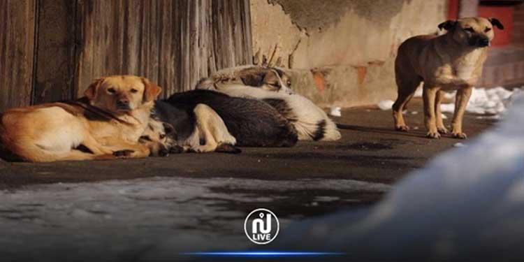 La Goulette : Les chiens errants ne seront plus abattus