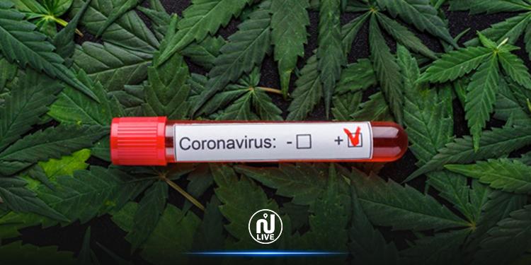 Covid-19 : Et si le cannabis était un outil précieux ?