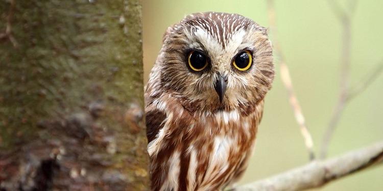 بسبب 160 بومة..صياد يواجه تهمة التآمر على الطيور