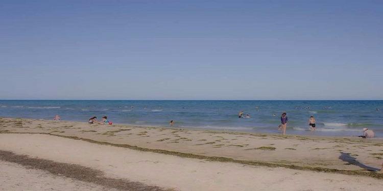 شاطئ الشفار: العثور على 41 طفلا ضائعا