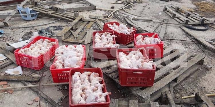 رواد : كشف مسلخ عشوائي للدجاج وغير مرخص (صور)