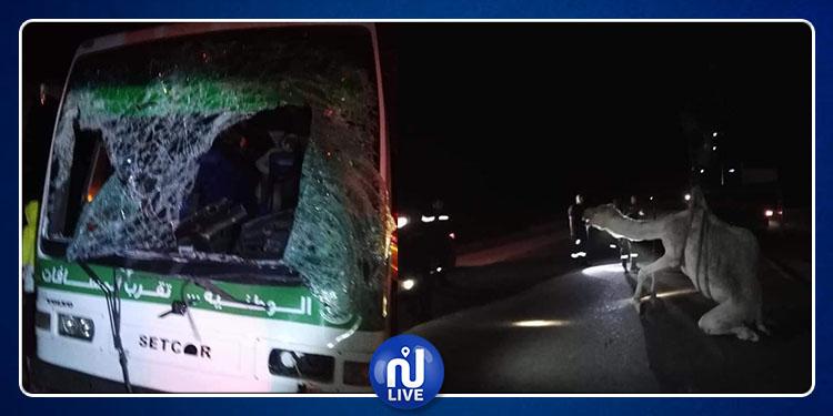 نفطة : إصابة 3 أشخاص في اصطدام حافلة بجمل (صور)