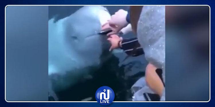 بالفيديو.. حوت يرجع هاتف لصاحبه بعد أن سقط في البحر