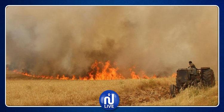 سليانة: حريق يأتي على 3 آلاف متر مربع من صابة القمح