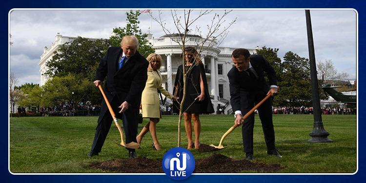 موت شجرة الصداقة الفرنسية الأمريكية