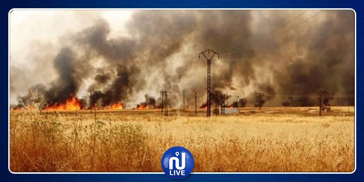 باجة: حريق يأتي على أكثر من هكتارين من الشعير في أحواز مدينة باجة