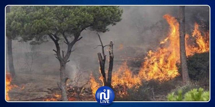نابل: إندلاع حريقين تزامنا مع بداية موسم الحصاد