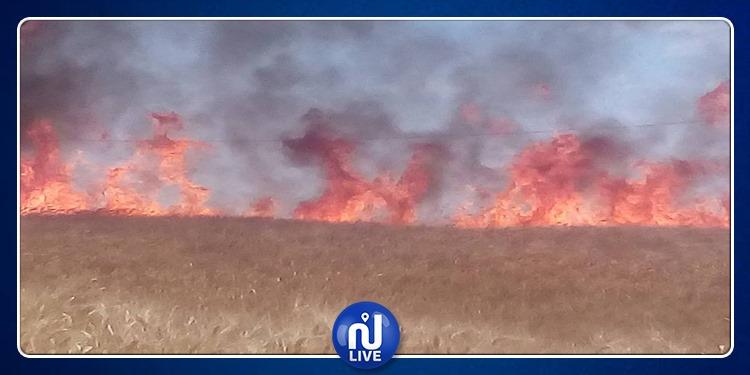 سليانة الشمالية: حريق يخلف خسائر بمحاصيل الحبوب