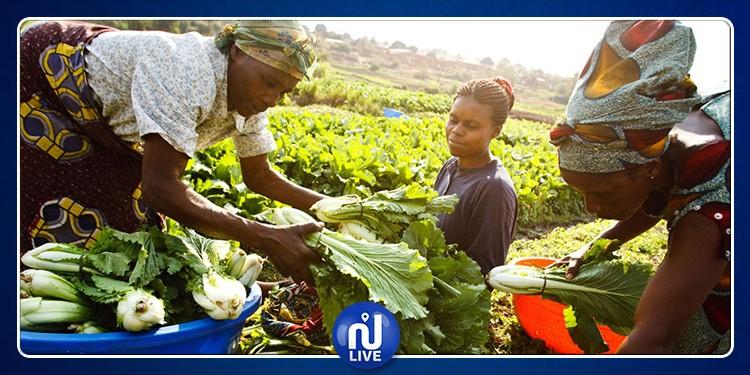 Les ingénieurs africains appelés à affronter les défis de la sécurité alimentaire