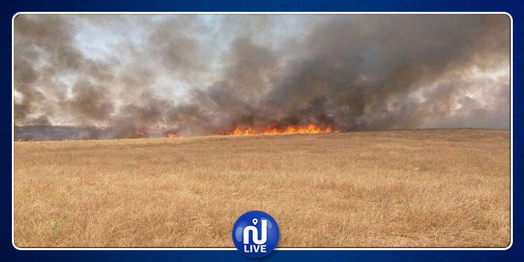 سليانة: السيطرة على حريق بإحدى الأراضي الفلاحية