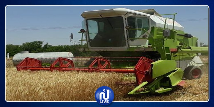 زغوان : 67 ألف هكتارا من مساحات الحبوب بالجهة تم حصادها