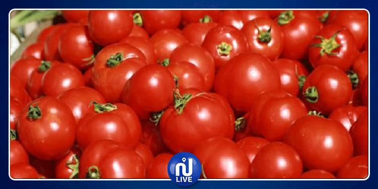 قربة: حجز 50 طنا من الطماطم الطازجة