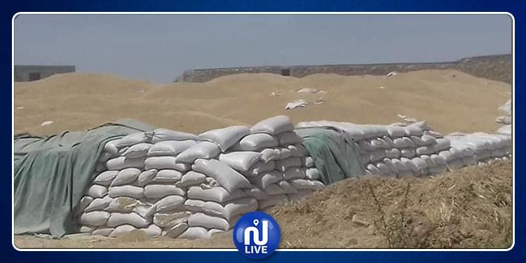 سليانة: مراكز التجميع عاجزة عن استيعاب الحبوب