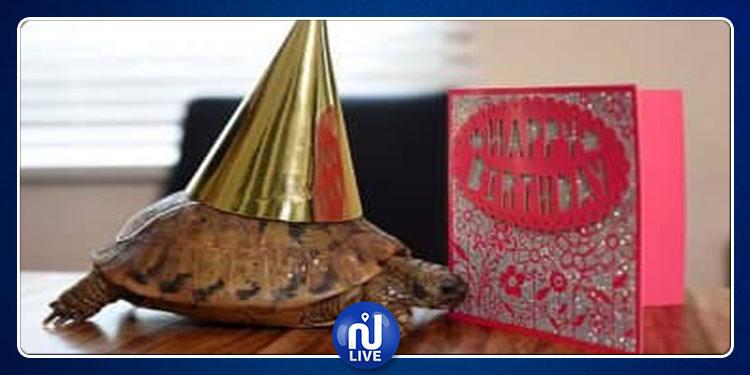 الاحتفال بعيد ميلاد أقدم سلحفاة في العالم (صور)