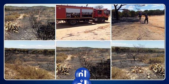 Incendie de la pinède de Béni Khiar: Importants dégâts à tous les niveaux