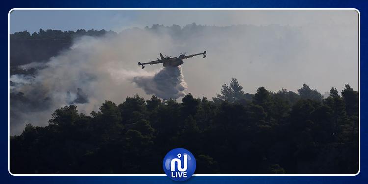 Grèce: L'Ile d'Eubée en proie aux flammes et une forêt de pins détruite