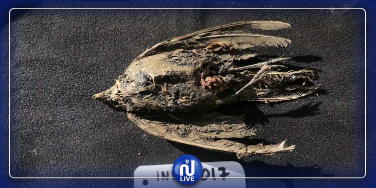 Les restes d'un oiseau de plus de 40.000 ans, découverts en Sibérie