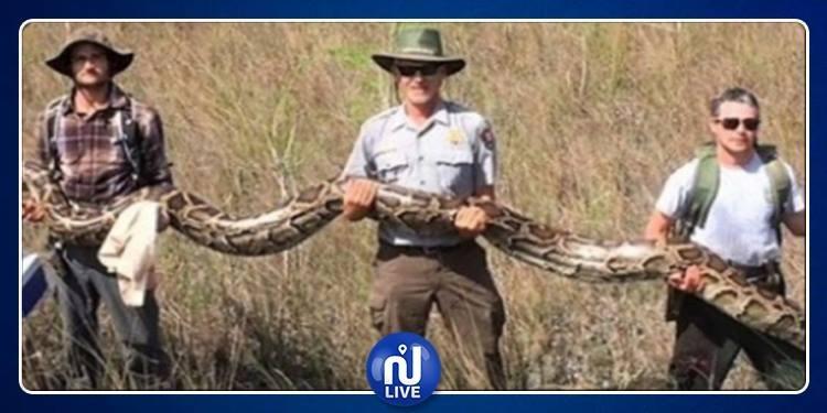 يزن 64 كغ وطوله 5 أمتار..العثور على ثعبان ضخم (صور)