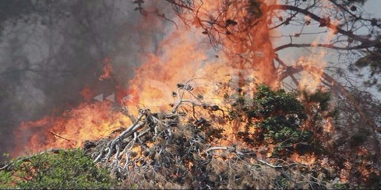 بنزرت/رفراف: حريق يلتهم مساحة كبيرة من أشجار اللوز والعنب