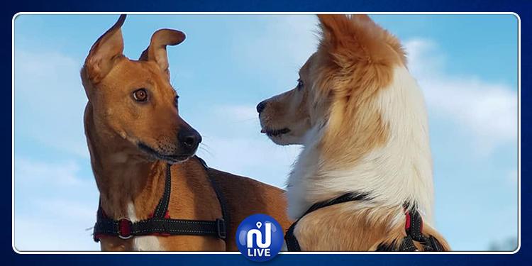 بسبب داء الكلب.. حظر استيراد الكلاب من مصر