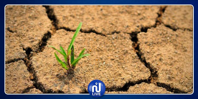 التربة مهددة بالتدهور في أفق 2050