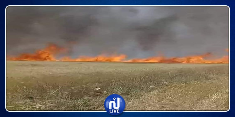 باجة .. حريقان يأتيان على هكتارات من حقول الحبوب